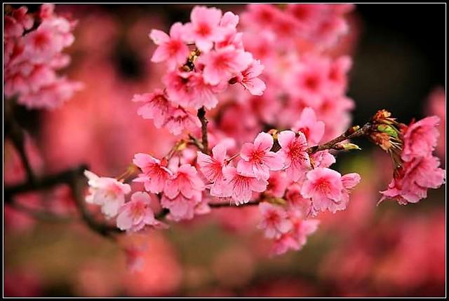 春有百花秋有月~聖嚴法師 - hung22 - 彬彬的博客
