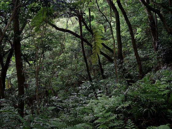 [桃園縣] 打鐵寮步道的荒野探險記