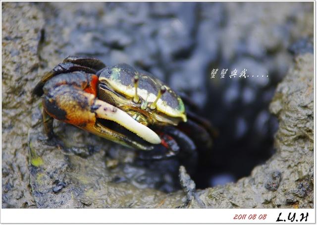 八里.挖子尾.蟹蟹