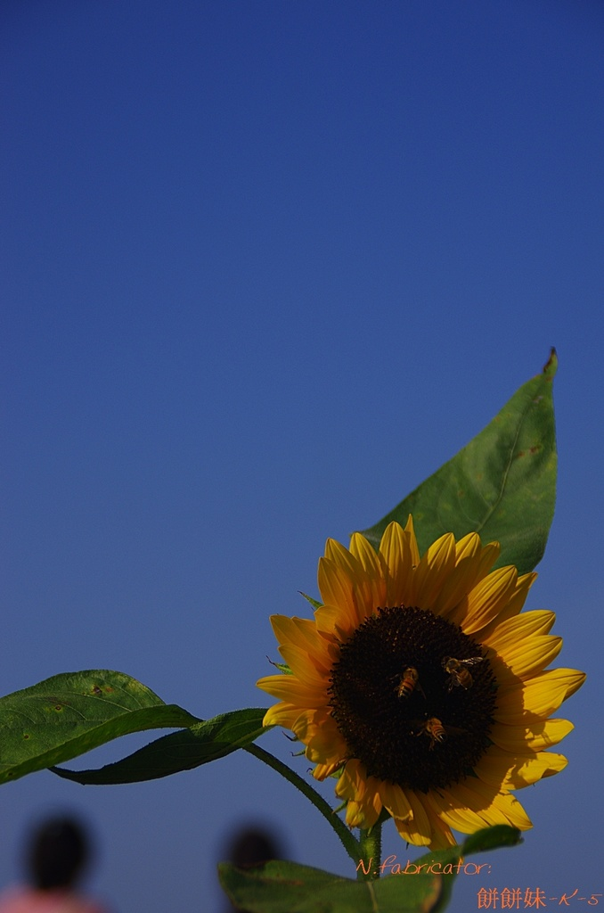 向陽農場.荷園農場