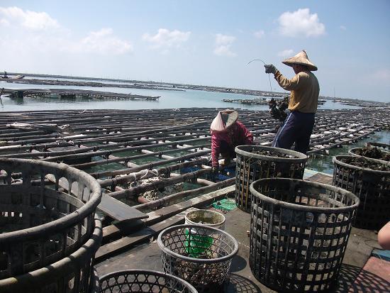 DSCF6924一對蚵農夫妻正在他們的浮棚上工作.JPG