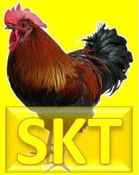 SKT超級觀音療法