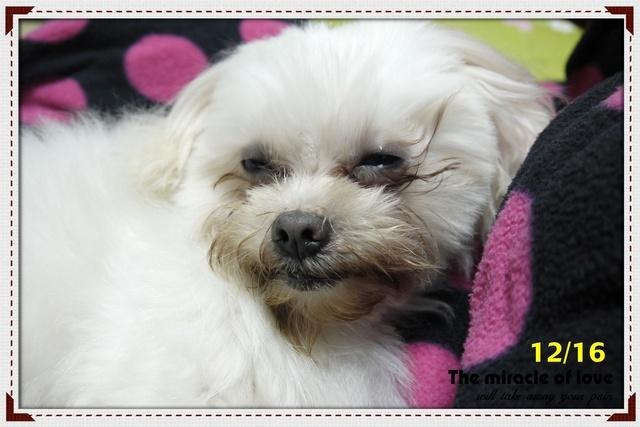狗狗眼睛有分泌物過多的問題