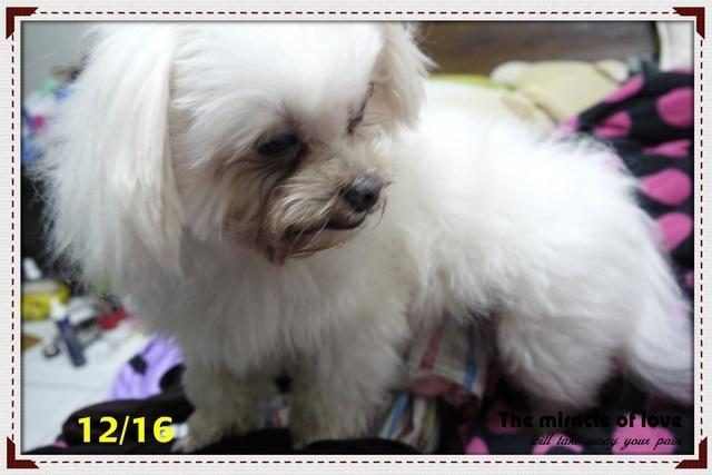 狗狗食用保護眼睛的葉黃素前照片