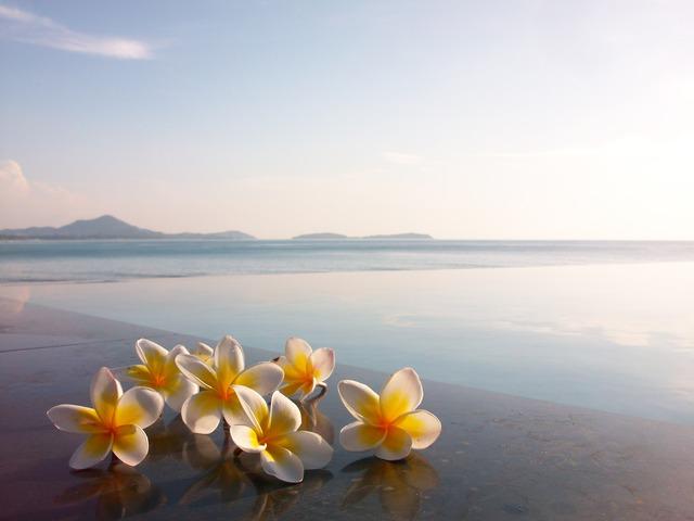 海邊的雞蛋花 國外旅遊 Pchome Online 網路家庭 開講